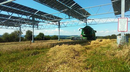 How Land Under Solar Panels Can Contribute To Food Security Solar Solar Farm Solar Panels