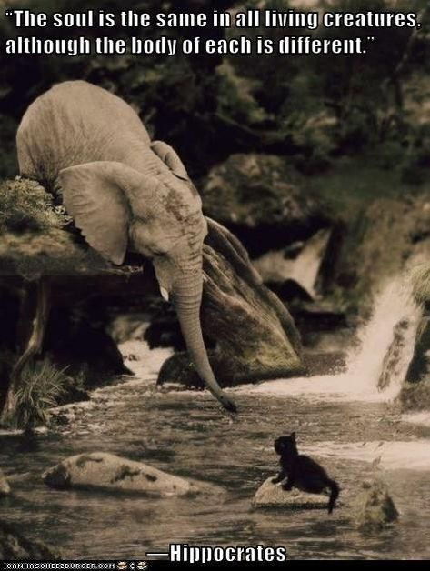 True compassion Elephants are among the most emotional creatures in the world they have been known to rescue other animals Animals And Pets, Baby Animals, Funny Animals, Cute Animals, Strange Animals, Beautiful Creatures, Animals Beautiful, Elephant Facts, All Gods Creatures