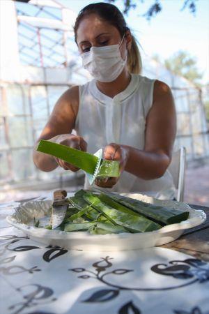 Yuzundeki Kizarikliklari Gecirdigi Gordu Simdi Bitkinin Seri Ureticisi Oldu Para Bitki Aloe Tibbi