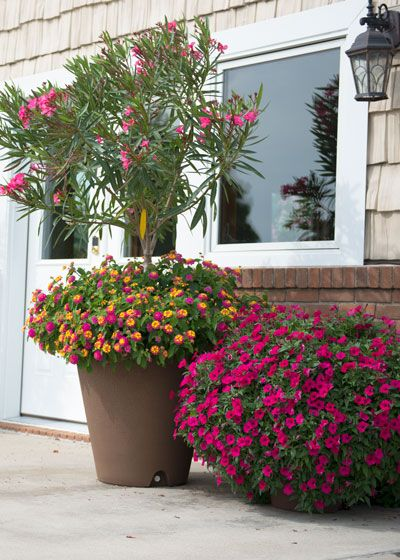Discover 6 Low Maintenance Tips For Gardening In Containers Container Gardening Flowers Container Garden Design Container Flowers