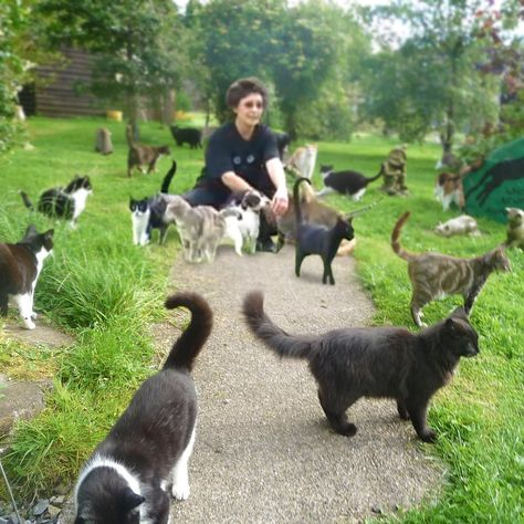 Please watch the video <3<3<3 Cat House on the Kings Cat Sanctuary, California. (a great, great venture, well worth supporting; she even takes ferals with FIV. rw)