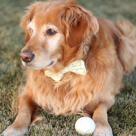 Gorgeous, thoughtfully designed accessories for your dog from Wag & Wonder | Dog Bow Tie | Dog Bow | Dog Collar | Cute Dog Collar | Print Dog Collar | Girl Dog | Boy Dog | Golden Retriever | Dog Mom | Stylish Dog | Dog Model | #wagandwonder #cutedogstuff #dogacessories #dogcollar #dogbowtie #dogbow #dogmom #stylishdog #dogmodel
