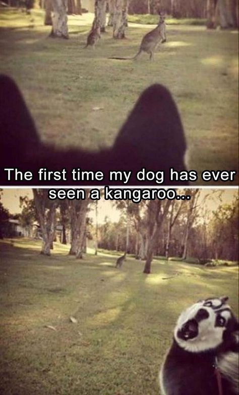 Funny Animal Picdump of The Day 206 (19 Photos)
