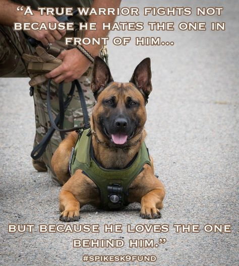 MWD & SOLDIER Military Working Dogs, Military Dogs, Police Dogs, Funny Dogs, Cute Dogs, Funny Animals, Animals Dog, Belgian Malinois Dog, Belgium Malinois
