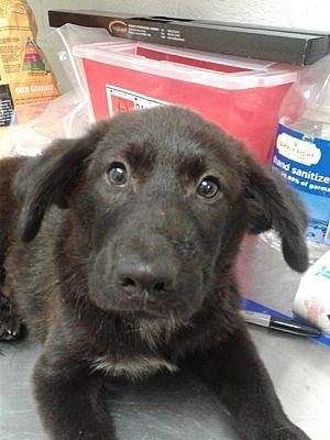 Fayetteville Wv Labrador Retriever Meet Peter Pan A Dog For Adoption Dog Adoption Pet Adoption Kitten Adoption