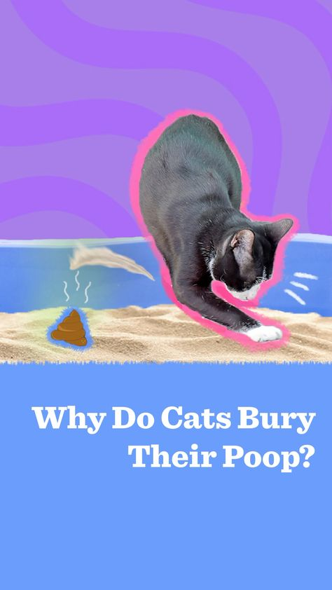 Why Do Cats Bury Their Poop?