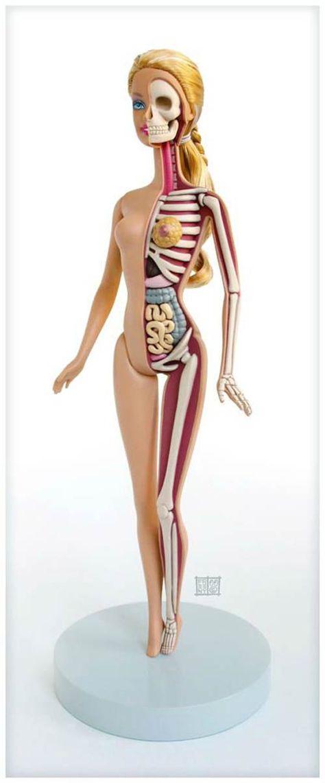 10 best Anatomy images on Pinterest   Human anatomy, Human body ...