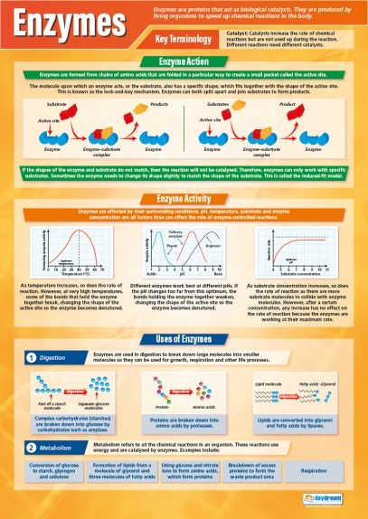 Learn about Enzymes with this engaging and educational poster. The colourful design of the poster makes it easy to be read from a distance, complementing all learning environments.