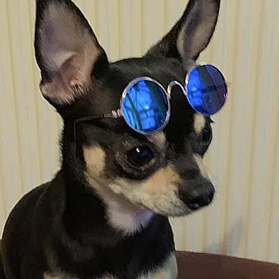 Sunglasses In 7 Colours For Chihuahuas And Puppies Small New