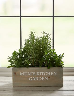 M&s Garden Plant Gifts