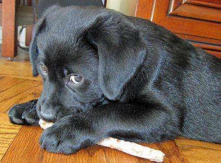 Winnie The Labrador Retriever Labradorpuppytoys Hunde