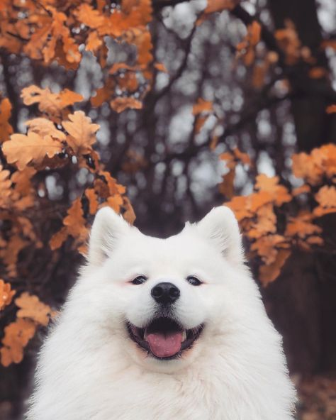 When your dog is more photogenic than you'll ever be 🍁🍂