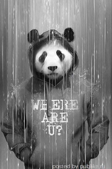 Kickout Wallpaper Where R U Seni Binatang Dan Hewan Download Panda Funk Logo Wallpaper Wallpaper For Your Phone Panda Art Panda Artwork Panda Wallpapers Awesome panda hd wallpaper for iphone