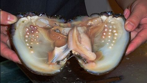 A Clam with Pearls. This is how they are formed.