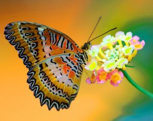 Whatsapp Butterfly Pictures Hd Wallpaper - Download Free ...