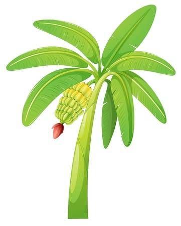 Illustration Of Banana Tree On A White Background Banana Tree Tree Wallpaper Iphone Tree Clipart