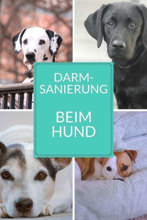 Dein Hunde Braucht Eine Darmsanierung So Klappt S In 2020 Hunde Gesunde Hunde Tierarzt