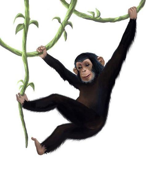 Monkey Smile Picture Art Print a4 Nursery Monkey Deco Mural Poster Animals k021