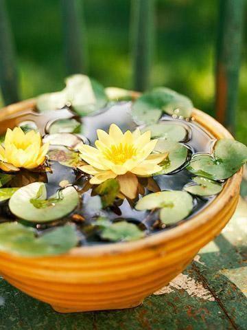 สว สด เพ อนๆ Ihome108 เพ อนคนไหนค ดอยากได อยากเล ยงปลาในอ างบ ว หร อม อ างบ วสวยในบ าน ว นน เราข Container Water Gardens Water Garden Indoor Water Garden