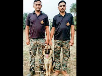 For The First Time The Railway Protection Force Rpf Will Be Using Trained Dogs To Track And Detect Wildlife Being Smuggled Throug In 2020 Dogs Working Dogs Wildlife