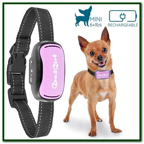 Best Training Shock Collar For Small Dogs Small Dog Bark Collar