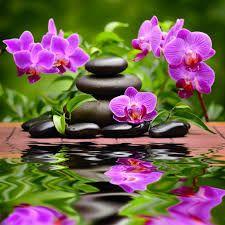 Resultat De Recherche D Images Pour Photo A Imprimer Zen Gratuit Paysage Zen Orchidee Fleurs