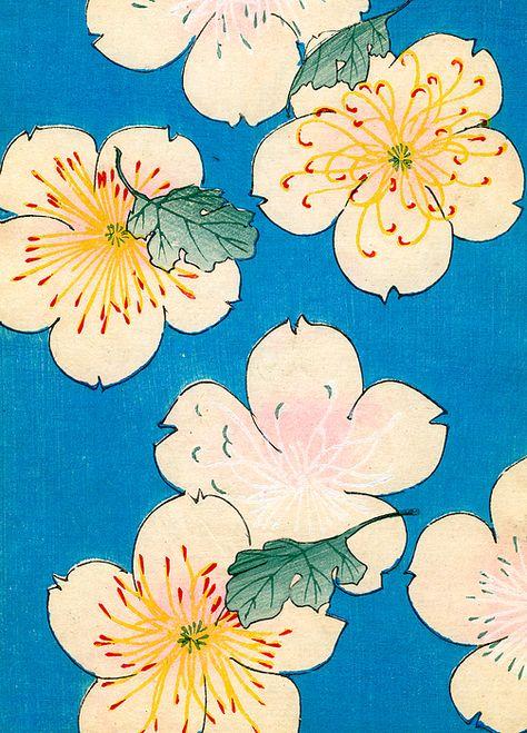 Vintage Japanese illustration of dogwood blossoms by Japanese School