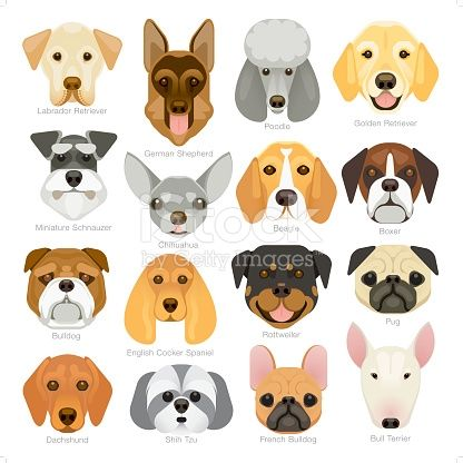 A Set Of 16 Popular Dog Breeds Icon In A Simple Geometrical Style Popular Dog Breeds Dog Illustration Dog Drawing