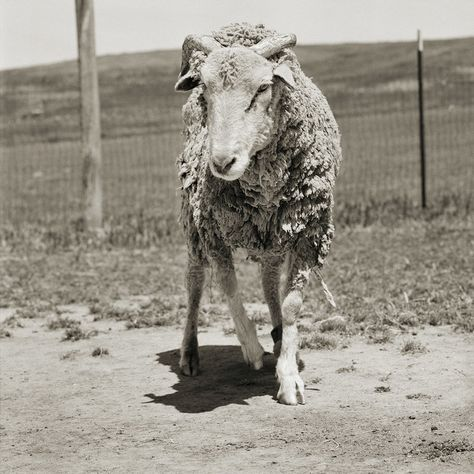 Powerful Portraits Show Rescued Farm Animals Who Were Given The Chance To Grow Old Animals Farm Animals Appaloosa Horses