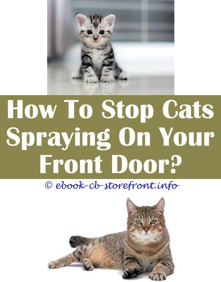 How To Get Cats To Stop Scratching Furniture Spray