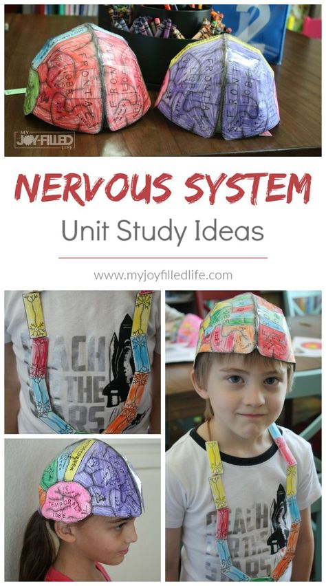 Books, activities, and projects to do with a human body or nervous system unit study. Great ideas for homeschoolers! Best Picture For Human Body System int Human Body Activities, Science Activities, Activities For Kids, Skeletal System Activities, Educational Activities, Human Body Unit, Human Body Systems, Child Life, Science For Kids