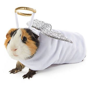 Merry Bright Angel Small Pet Costume Small Pet Small Pet Costumes Petsmart Small Pet Costumes Small Pets Pet Costumes