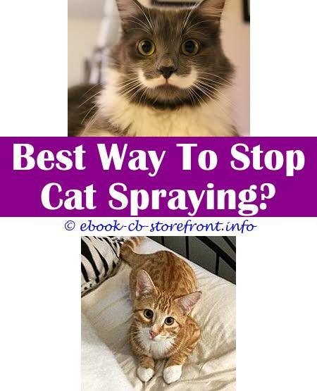 Pin On Cat Spray Repellant Ideas