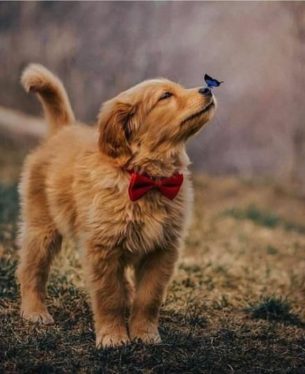 Pin By Michelle Pooler On Adoptable Pets Golden Retriever Rescue