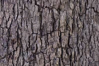 Pin By Madison Hollingsworth On Clay Tree Bark Texture Tree Textures Wood Bark