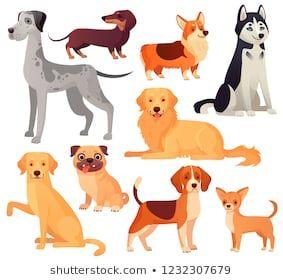 Dogs Pets Character Labrador Dog Golden Retriever And Husky