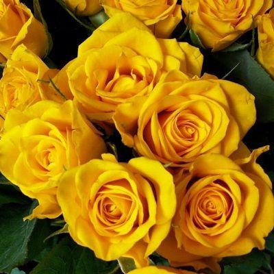 صور ورد اصفر رمزيات باقة ورد صفراء خلفيات ورد اصفر طبيعي مجلة رجيم Yellow Roses Yellow Flowers Flowers