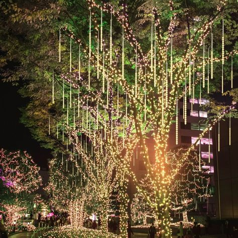 Icicle Lights Outdoor, Outdoor Lighting, Outdoor Wedding Lights, Outdoor Night Wedding, Ballroom Wedding Reception, Wedding Venues, Led Garden Lights, Backyard Wedding Lighting, Light Wedding