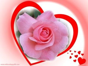 Love Pink Rose Wallpaper Love Quotes Love Rose Images Best Love Quotes