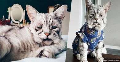 Cat With Rare Skin Condition Is Blessed With A New Happy Life For Him And His Best Friend Old Cats Cats Animal Stories