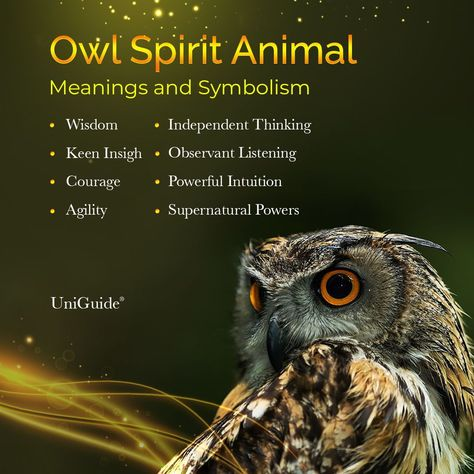 Spirit Animal Owl, Animal Spirit Guides, Power Animal, Animal Magic, Animal Meanings, Spiritual Animal, Animal Symbolism, Owl Pet, List Of Animals