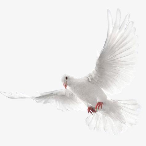 Millones De Imagenes Png Fondos Y Vectores Para Descarga Gratuita Pngtree Aves Volando Paloma Ave Pichon
