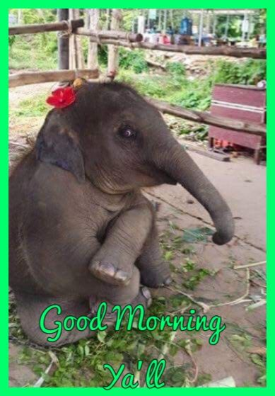 Pin By Catherine Julian On Good Morning 8 Animals Cute Animals Cute Baby Animals