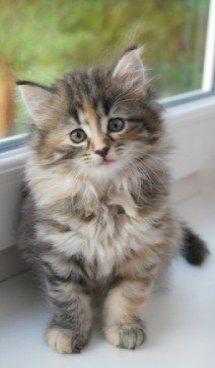 Pin On Sweet Kittens