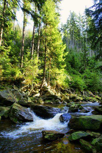 Schwarzwassertal, Erzgebirge, Germany