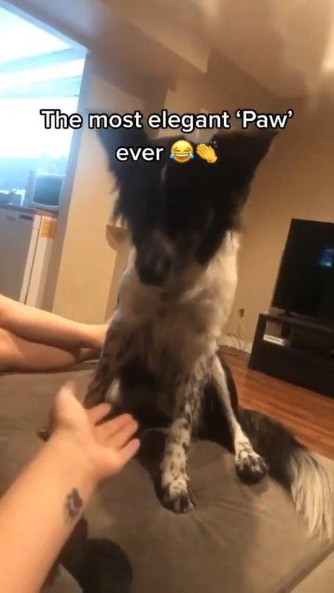 elegant dog hahaha