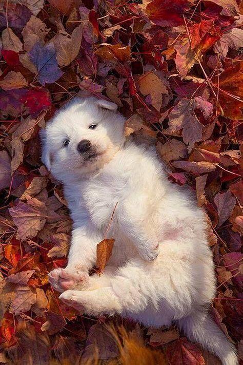 Gästebuch von Fuchs1960 Perros Blog ?  #Fuchs1960 #Gästebuch #von #Perros Graciosos #Perros Bonitos #Perros Mascotas ?