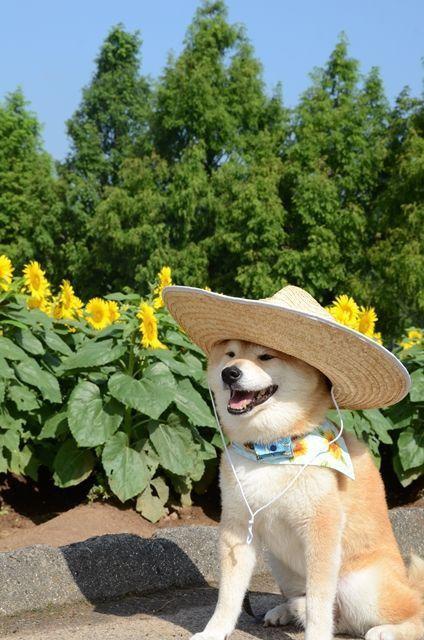 Corgi Dog In 2020 Niedliche Hunde Susseste Haustiere Hunderassen
