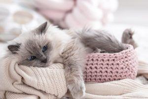 Schlaf Fur Deinen Katz Katzen Schlafplatz Deinen