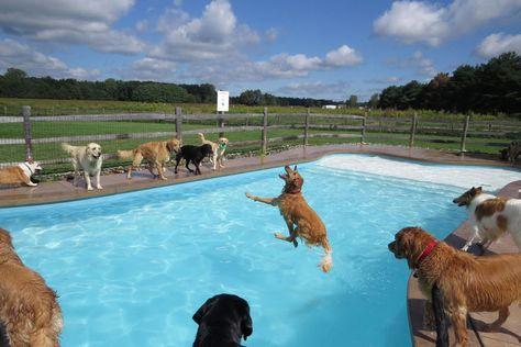 Comme nous, les chiens adorent barboter dans l'eau mais il est rare de nager en compagnie de vos animaux ! Qu'à cela ne tienne : un centre pour chiens a fait construire une piscine canine qui a récemment fait le bonheur de plusieurs toutous super chanceux. Une vidéo pleine de...